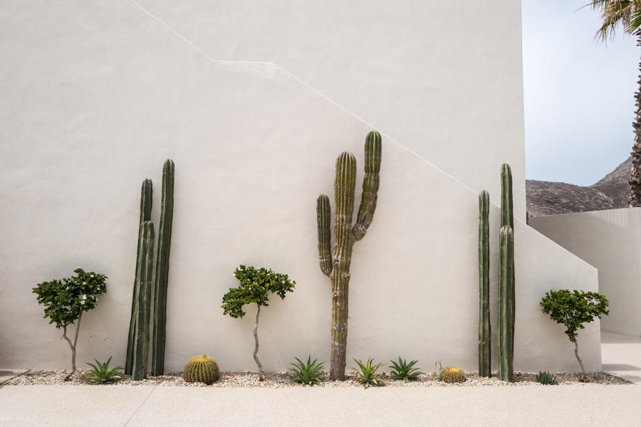 Cacti at Hotel San Cristóbal