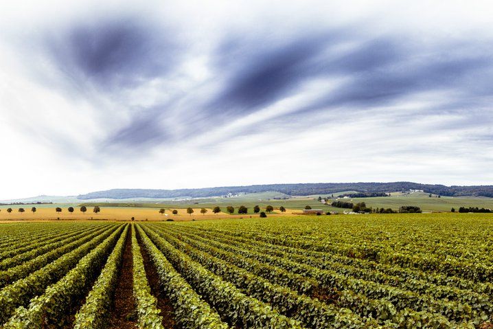 Champagne valley France landscape