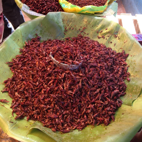 sun-dried grasshoppers