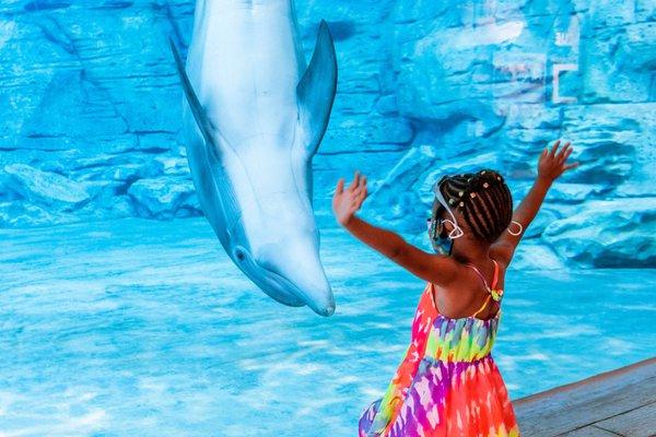 Clearwater Marine Aquarium.