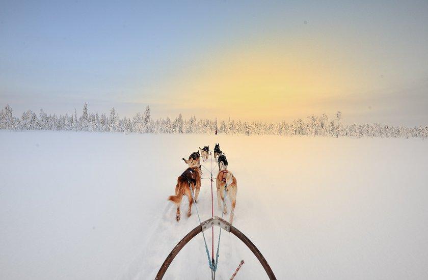 Dog Sledding in Sweden