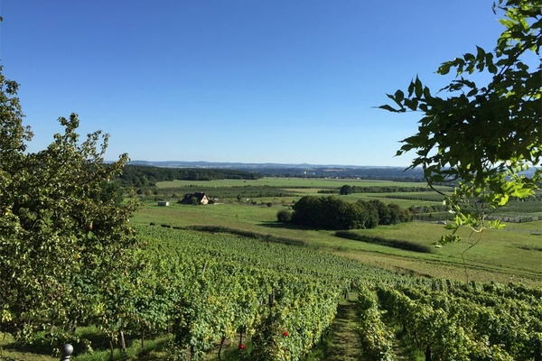 Dresden, vineyards