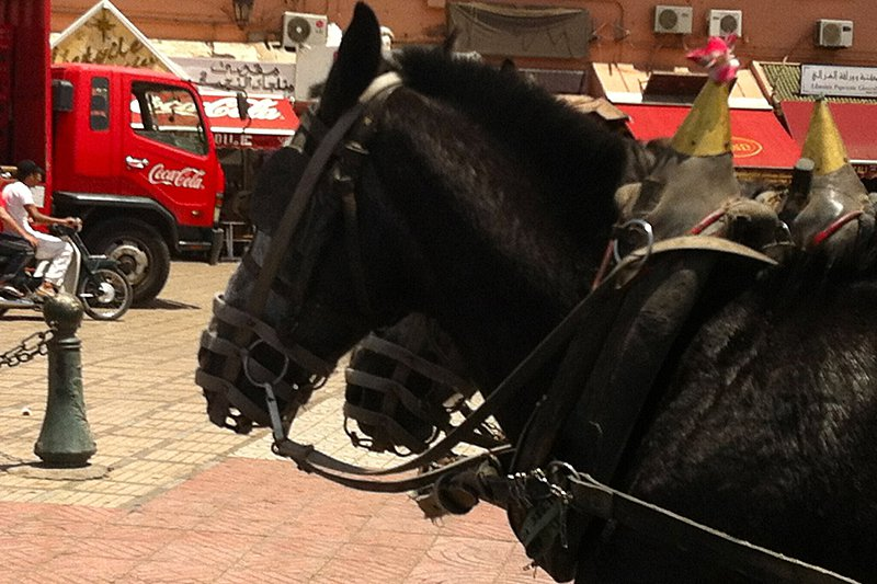 The culture shock: Coca-Cola trucks and horses as transportation. It's crazy how both operate on the same streets.