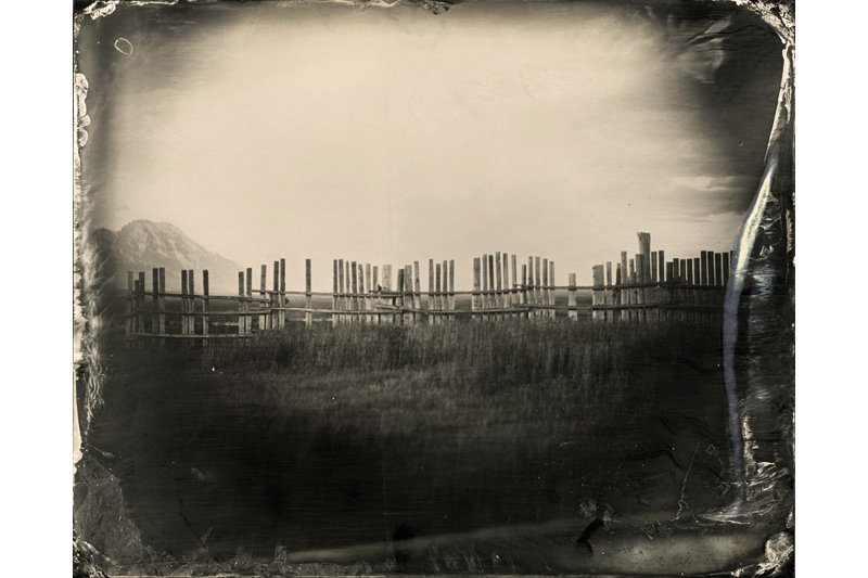 """Fence Post at Dusk."" 8 x 10 original ferrotype."