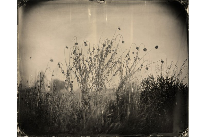 """Wildflowers on the River Bank."" 8 x 10 original ferrotype."