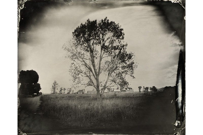 """The Lone Tree."" 8 x 10 original tintype."