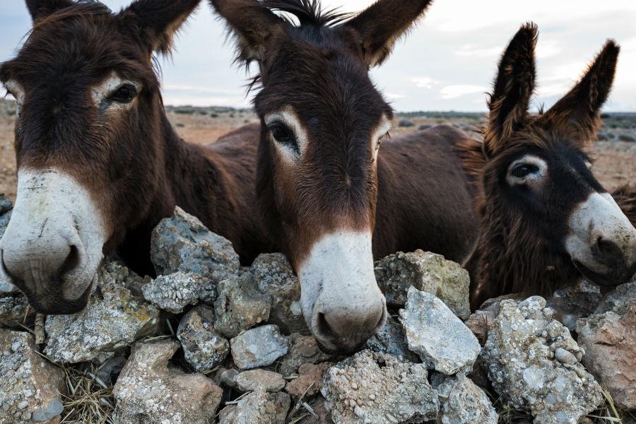 Favignana donkeys