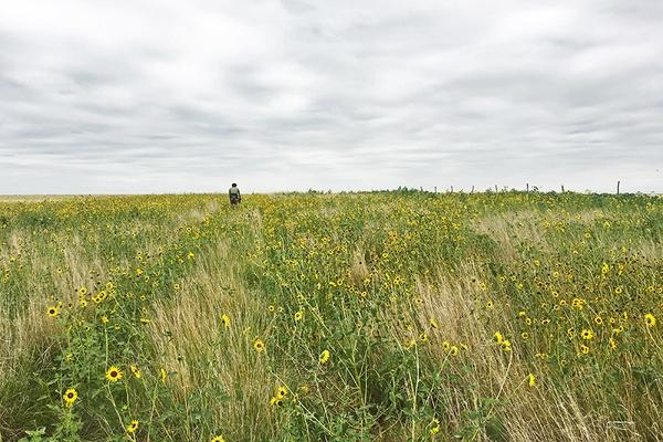 Biking in a Field