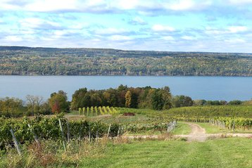 grapevines overlooking Seneca Lake in the Finger Lakes
