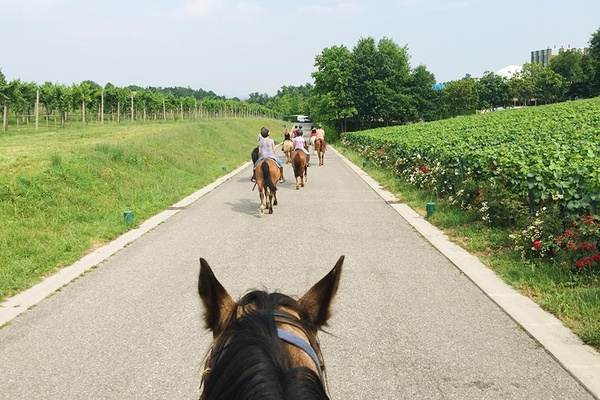 Riding in Franciacorta