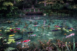 Monet's Pond. Nemichi Shrine, Seki City, Gifu, Japan. Photo by Hidenobu Suzuki.