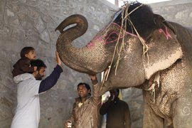 Meeting elephants at Elephant Village, India.
