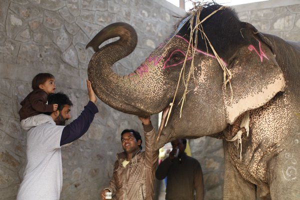 Meeting elephants at Elephant Village, India.