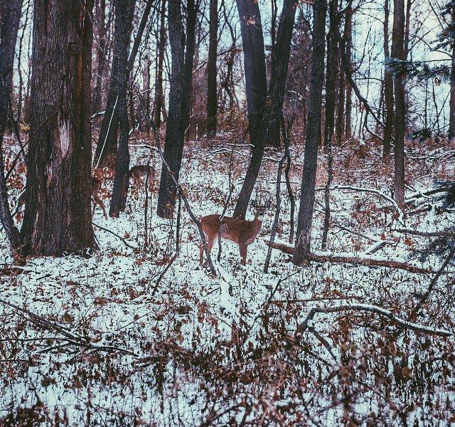 Woodland Creatures