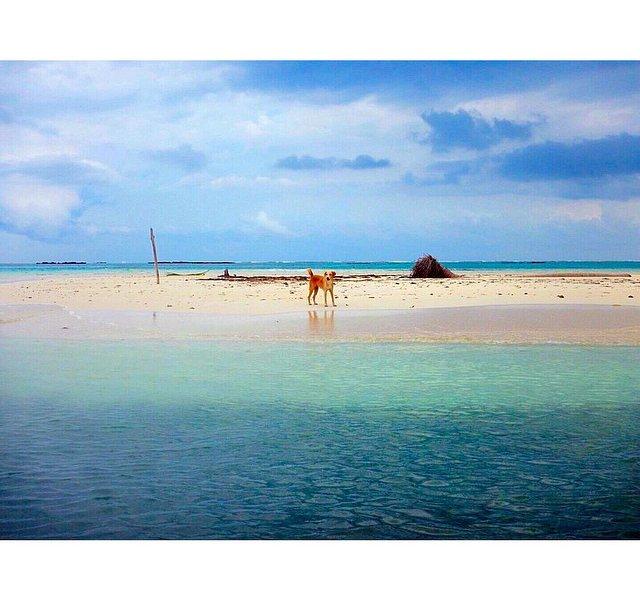 Beach Pal