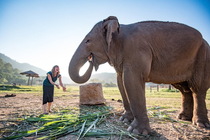 Elephants supported by Intrepid travel