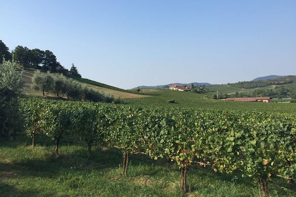 Vineyards in Franciacorta
