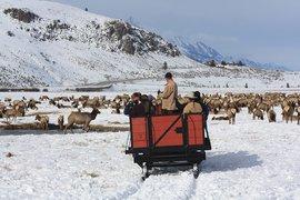 Sleigh Ride National Elk Refuge