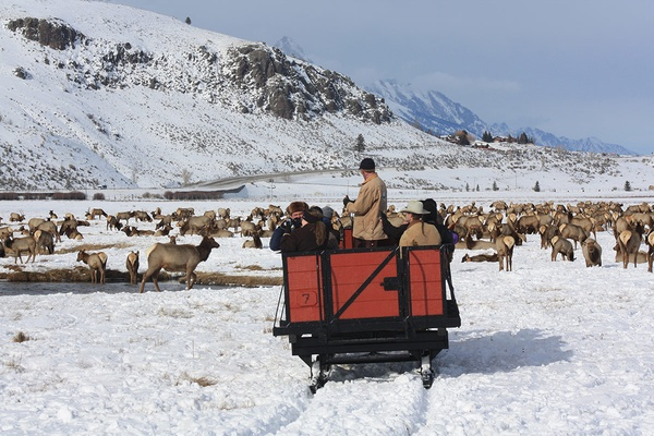 Sleigh Ride, National Elk Refuge, Jackson Hole, Wyoming