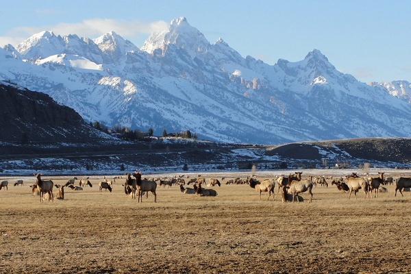 National Elk Refuge, Jackson Hole, Wyoming