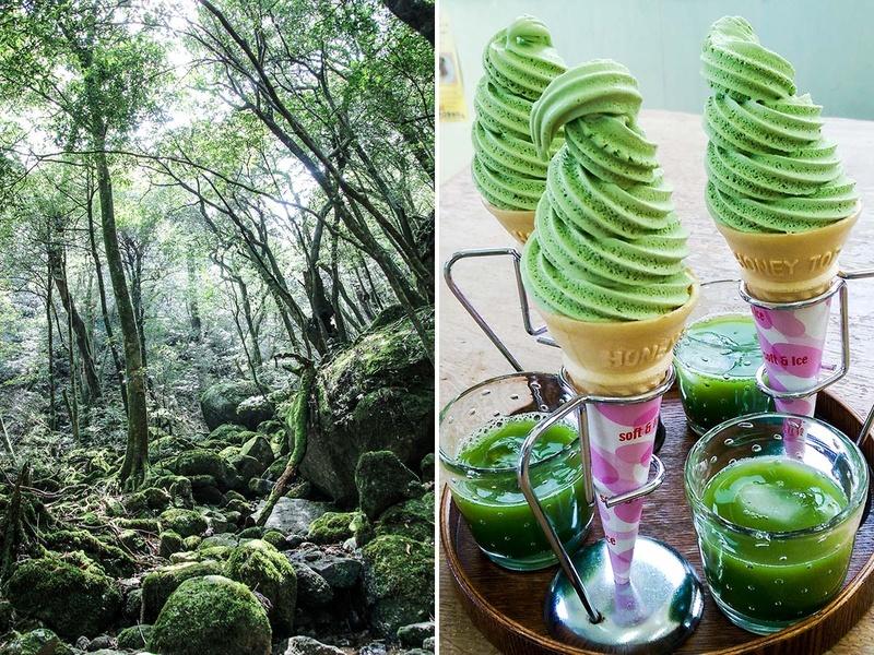 Shiratani Unsuikyo, Hachimanjyu Chaen Tea House, Yakushima, Japan