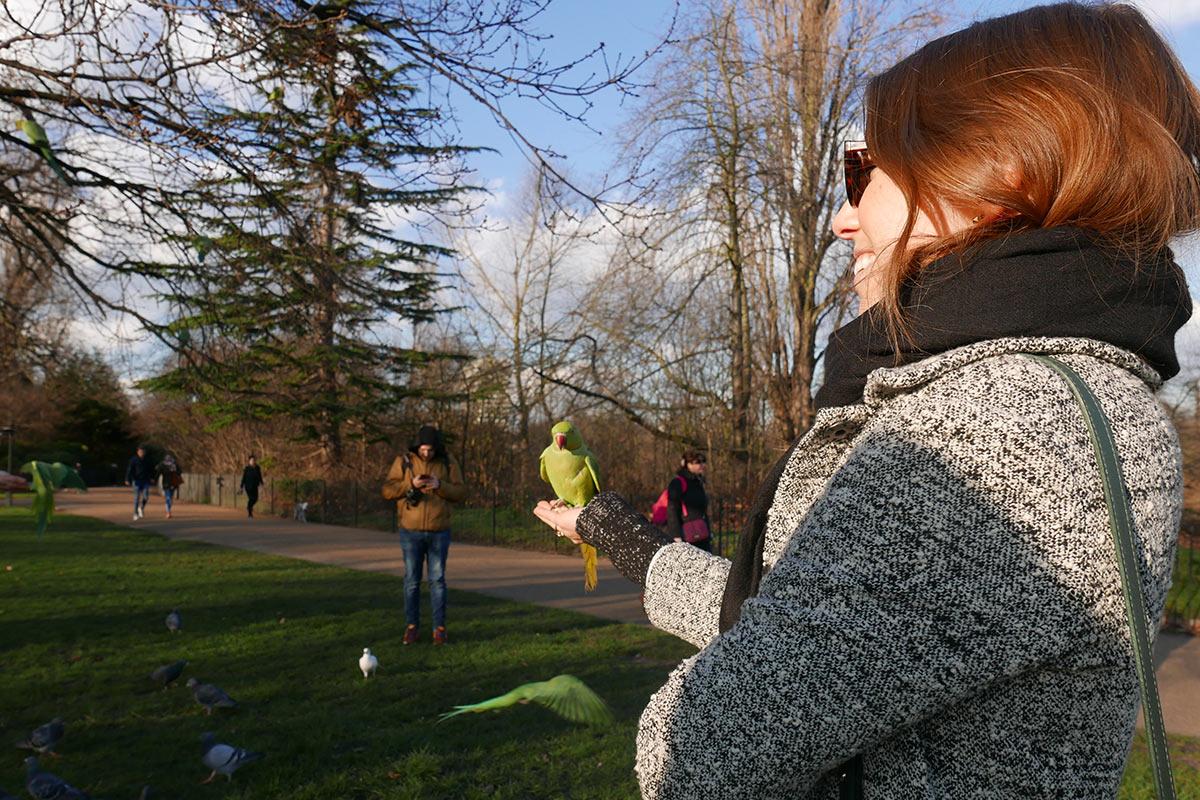Feeding parakeets in Hyde Park, Kensington, London