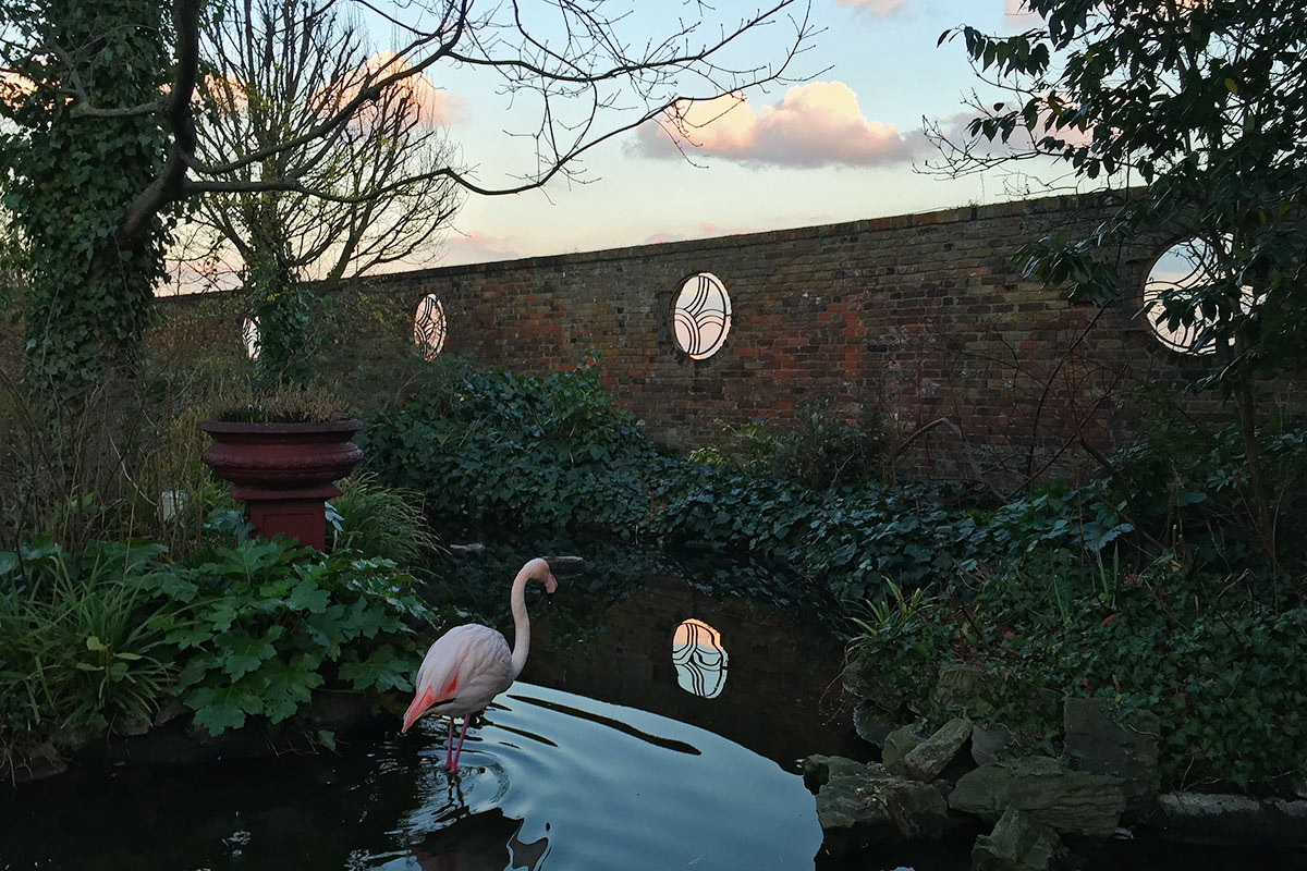 Flamingo, The Hanging Gardens, Kensington, London