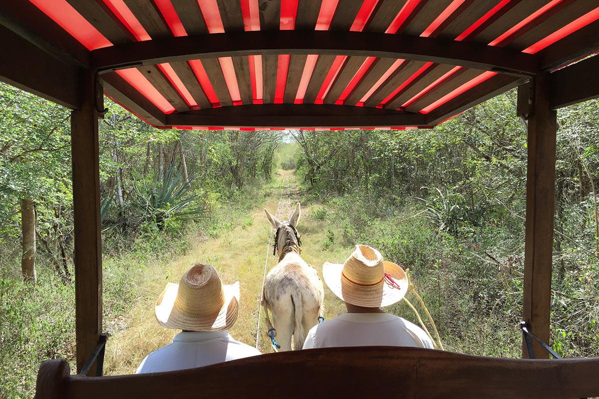 Hacienda Temozon, Yucatan, Mexico