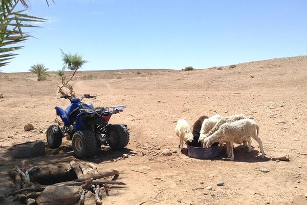 Desert Buggy, Erg Chigaga Luxury Desert Camp