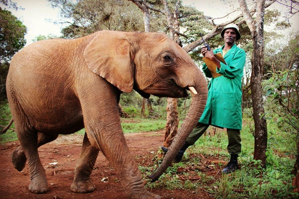 An elephant and its handler at David Sheldrick Wildlife Trust.
