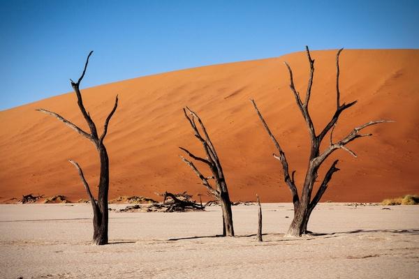 Namibia acacia trees
