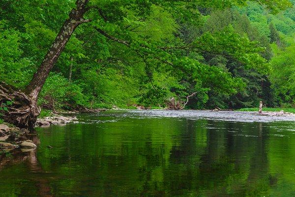 Willowemoc Creek, Catskills, New York