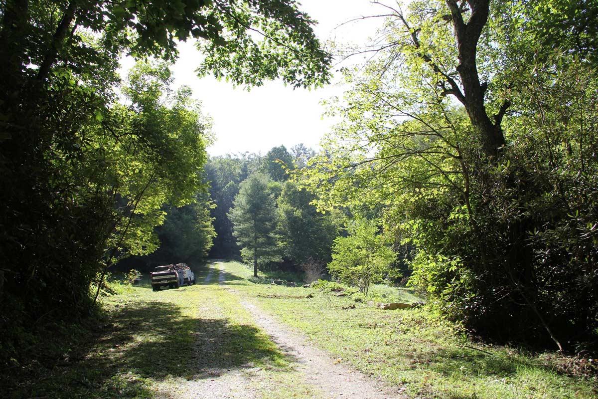 Woods around Old Edwards Inn