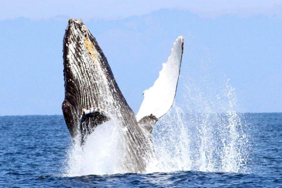 Photo courtesy of Oceanic Society.