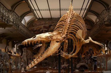 Gallery of Paleontology and Comparative Anatomy