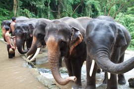 Bathing elephants in Patara Elephant Farm.