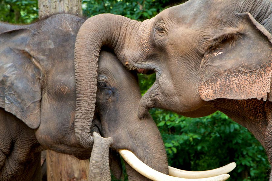 Be an Elephant Owner For a Day
