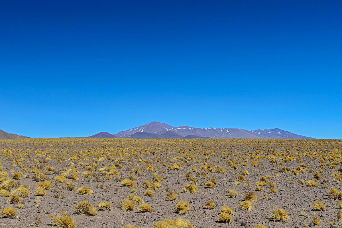 Quebrada de Calalaste, Puna