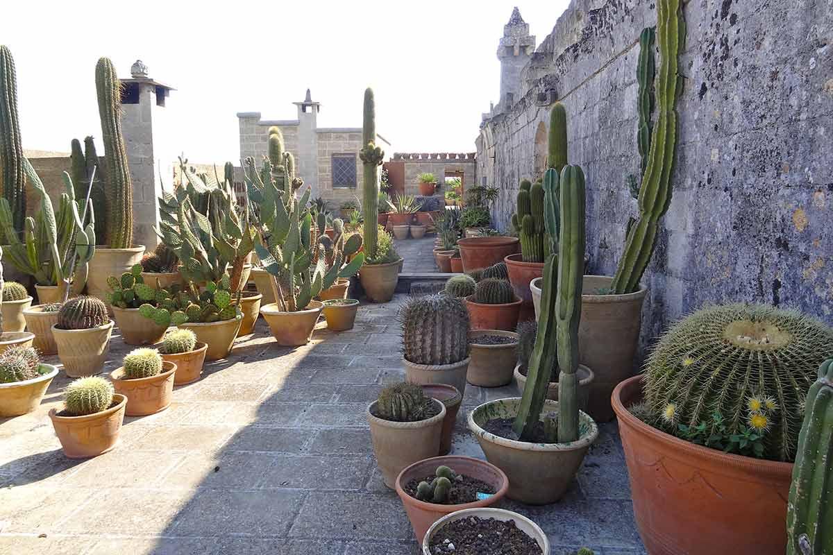 Il Convento di Santa Maria di Costantinopoli Succulent Garden