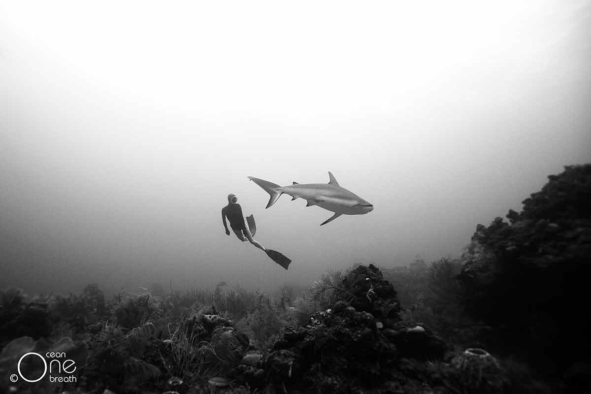 Hold your breath this couple freedives with sharks and lives to