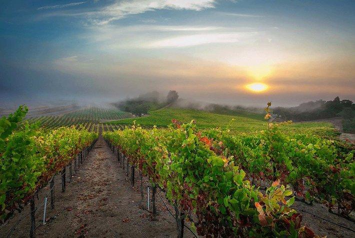 Rochioli Winery in Sonoma California