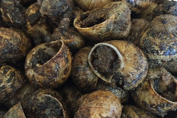 Snails, Roses, Spain