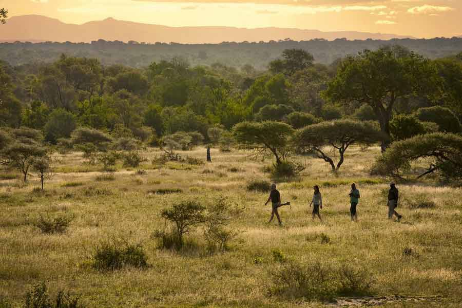 d6439de76085 Africa's Best Safari Lodges - Fathom