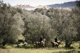 Sao Lourenceo do Barrocal Horses in Portugal