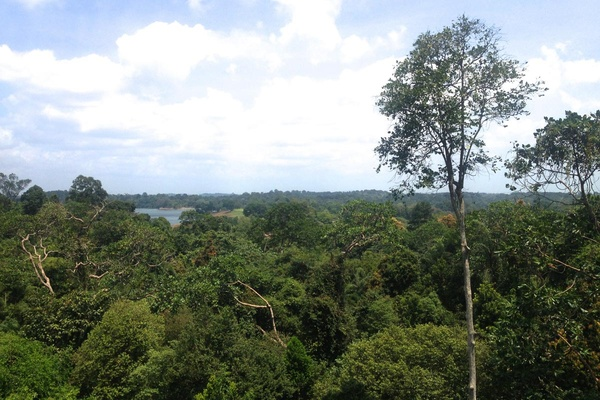 MacRitchie Reservoir canopy view