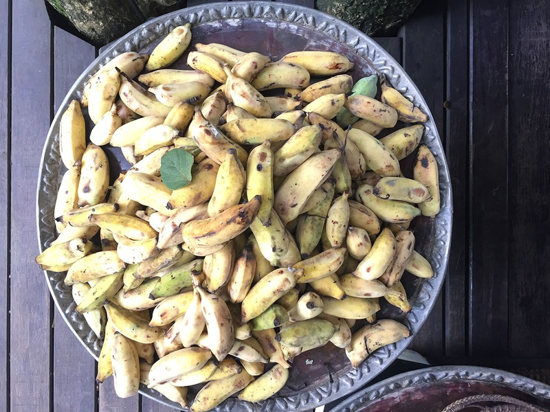 Bananas Used to Feed Elephants at Four Seasons Tented Camp