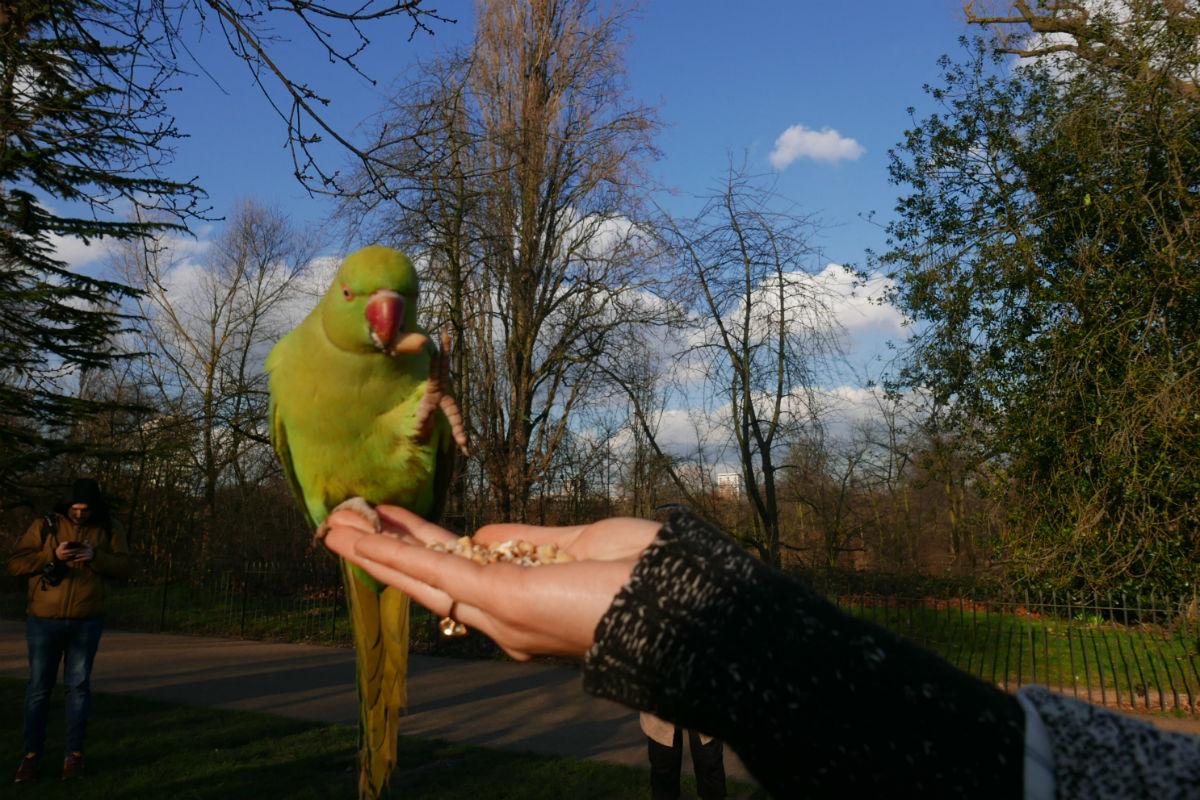 Feeding birds in Hyde Park.