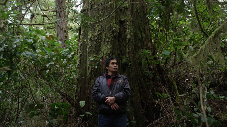 Joe Martin in Pacific Rim National Park Reserve, in Tofino. He makes his canoes out of big red cedar trees like this one.