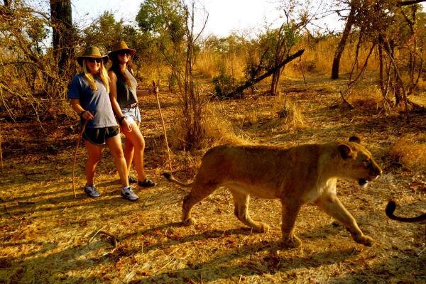 Wildlife Walk