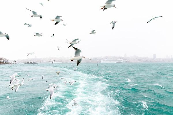 Seagulls on the Bosphorus River Istanbul